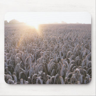 Field of Wheat Mouse Pads