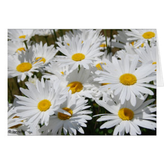 Field of White Daisies Card