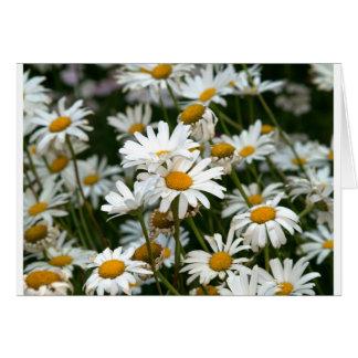 Field of White Diasies Photo Card
