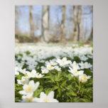 Field of white flowers print