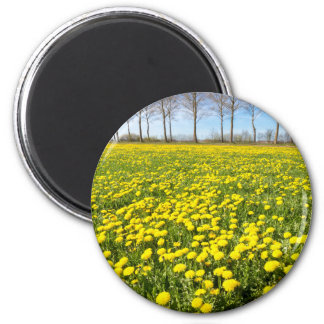 Field of yellow dandelions in grass with tree line magnet