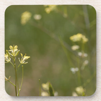 Field of Yellow Flowers Coaster