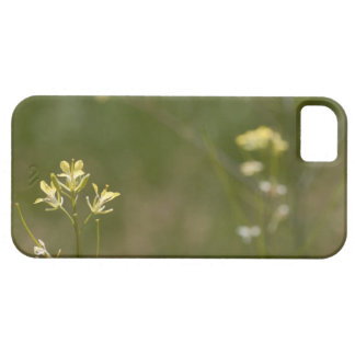 Field of Yellow Flowers iPhone SE/5/5s Case