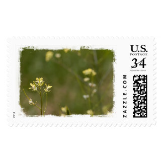 Field of Yellow Flowers Postage