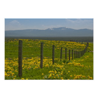 Field of Yellow Sunflowers and Mountains Poster