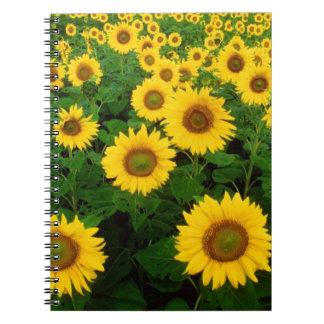 Field of Yellow Sunflowers Flowers Notebook