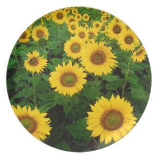 Field of Yellow Sunflowers Plate