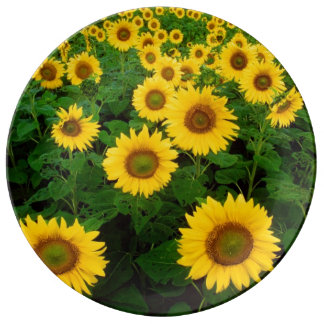 Field of Yellow Sunflowers Porcelain Plates