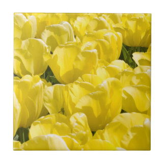 Field of Yellow Tulips Small Square Tile