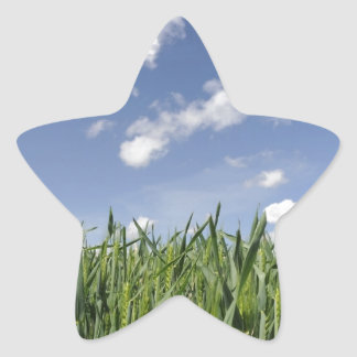 Field of young corn star sticker
