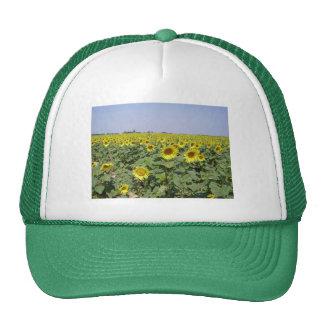 Field off sunflower - Field of sunflower Mesh Hats