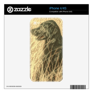 Field  Outdoorsman Hunting Dog Puppy Black lab iPhone 4 Decal