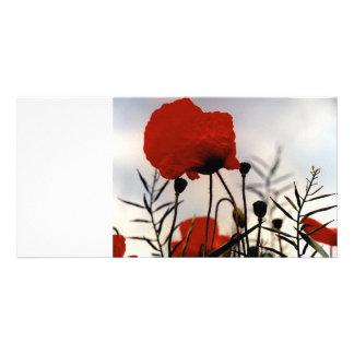 Field Poppies Card