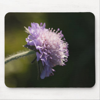 Field Scabious Mouse Pad