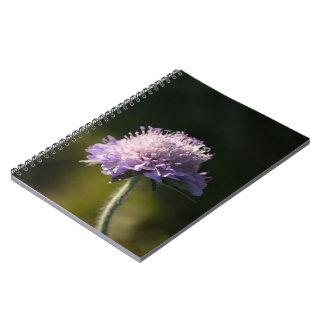 Field Scabious Notebook