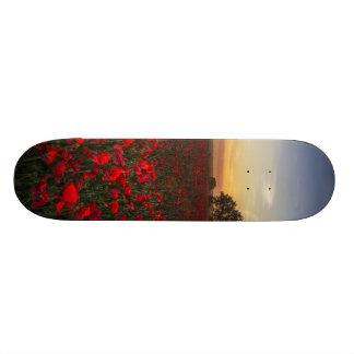 Field Skateboard Deck