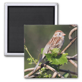 Field Sparrow Magnet