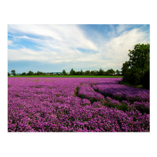 Field with chives postcard