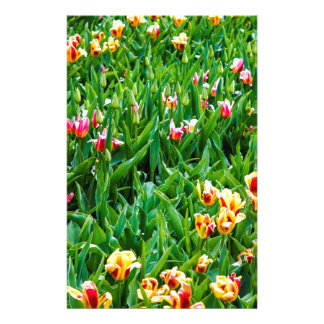 Field with Pink and Yellow Tulips Stationery