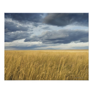 Field with storm clouds poster
