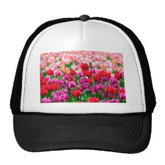 Field with tulips hats