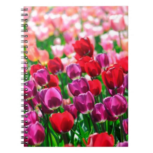Field with tulips note book