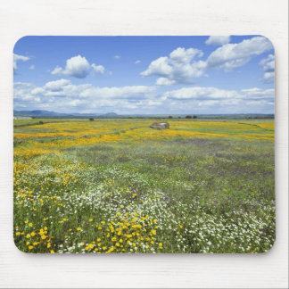 Fields In Springtime Near Guadalupe Mouse Pad