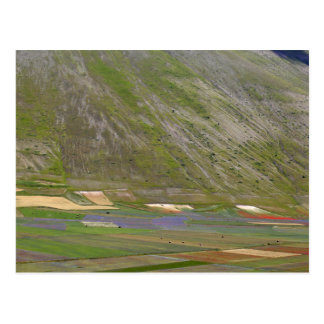 Fields in the Sibellini Mountains in Italy Postcard