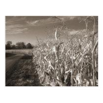 Fields of Grain Postcard