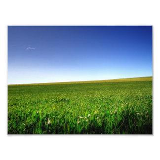 Fields of Green Photo