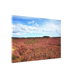 Fields of heather in Scotland Stretched Canvas Prints