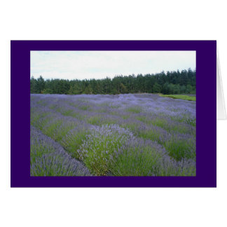 Fields of Lavender Stationery Note Card