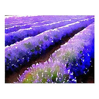 Fields of Lavender Postcard
