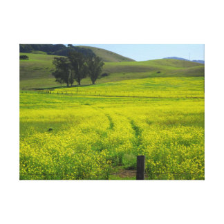 Fields of Mustard Seed - Wrapped Canvas Stretched Canvas Prints