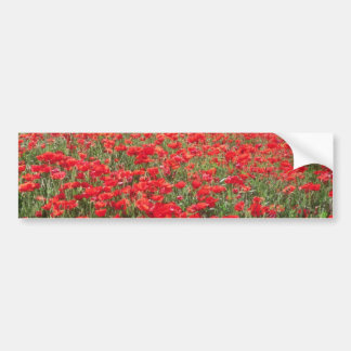 Fields of poppies near Carpentras flowers Bumper Sticker
