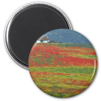 Fields of poppies near Cordoba, Andalusia fl Refrigerator Magnet