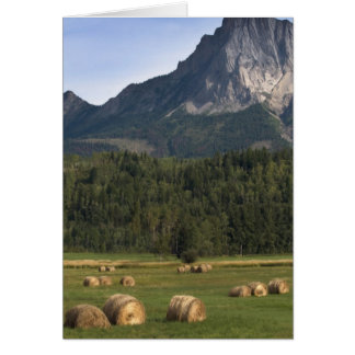 Fields with bailed hay, Alberta, Canada Greeting Cards