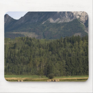 Fields with bailed hay, Alberta, Canada Mouse Pad