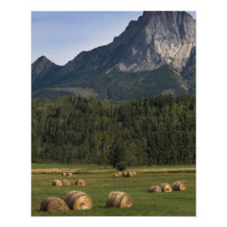 Fields with bailed hay, Alberta, Canada Poster