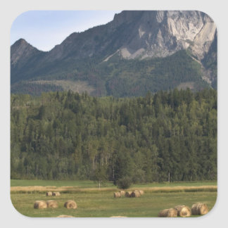 Fields with bailed hay, Alberta, Canada Square Sticker