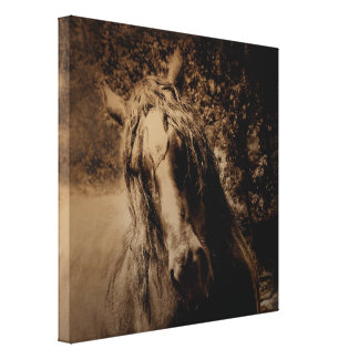 FIERCE as 24 x 24 Gallery Wrap Canvas Print +Other