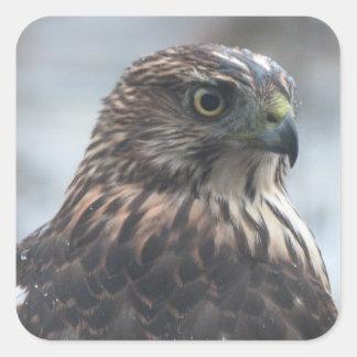 Fierce Hawk Square Sticker