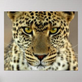 Fierce Leopard Poster