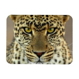 Fierce Leopard Flexible Magnet
