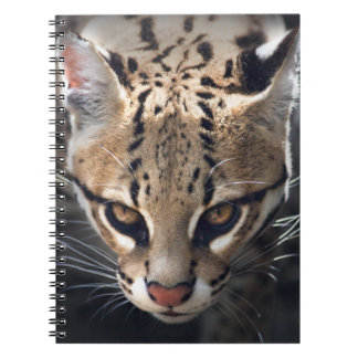 Fierce Notebook