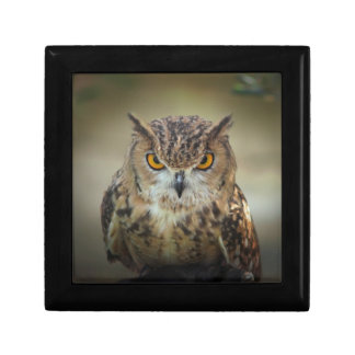 Fierce Orange Eyed Owl Jewelry Box