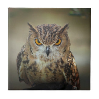 Fierce Orange Eyed Owl Small Square Tile