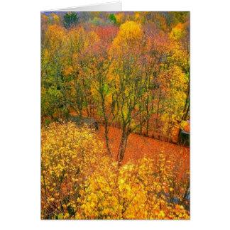 'Fiery Autumn' Blank Greeting Card