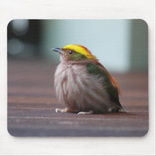 Fiery-capped Manakin Mouse Pad