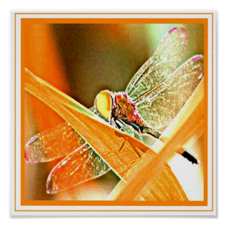 Fiery Dragonfly Poster